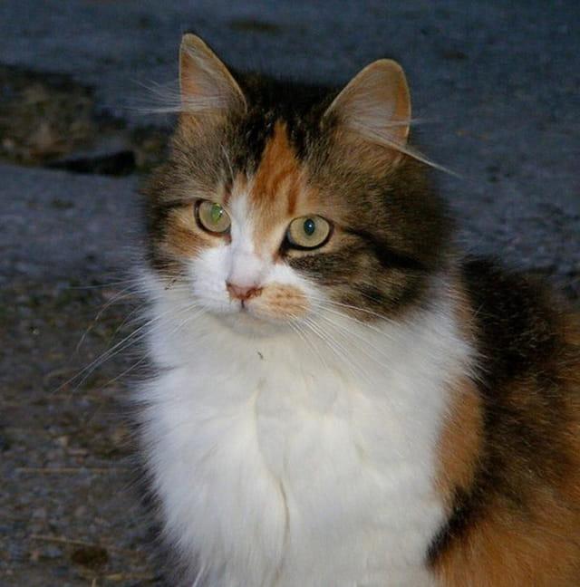 Belle chatte
