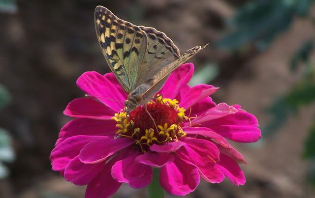 Belle fleur et joli papillon