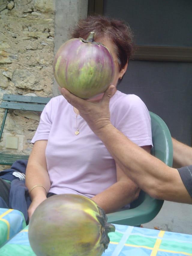 Belles aubergines
