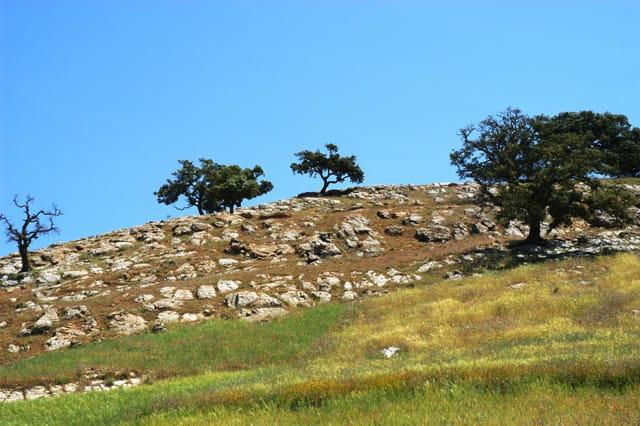 Beni Mileuk : paysage
