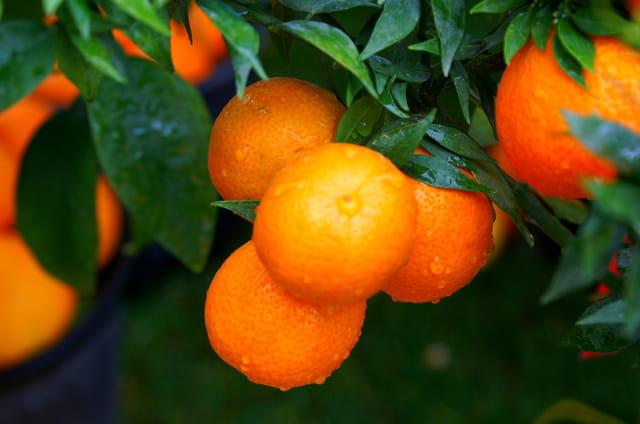 Bienvenue au pays des citrons