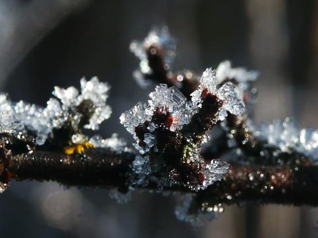 Bijoux de cristaux de glace