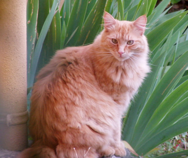 Billy, seigneur chat