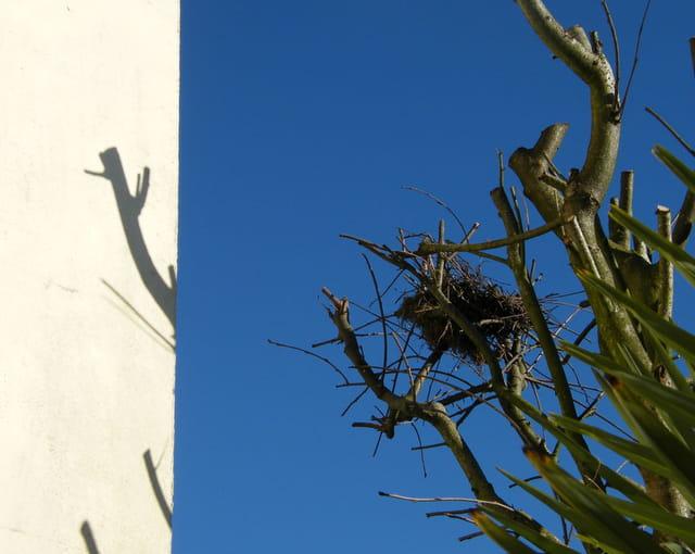 Blanc, bleu, nid