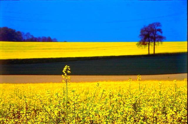 Bleu brun jaune