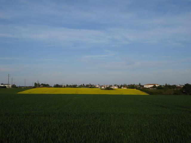Bleu jaune vert