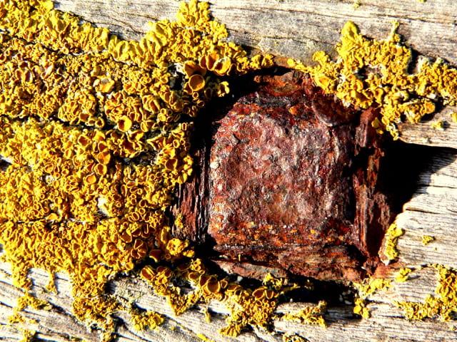 Bois, clou et lichen