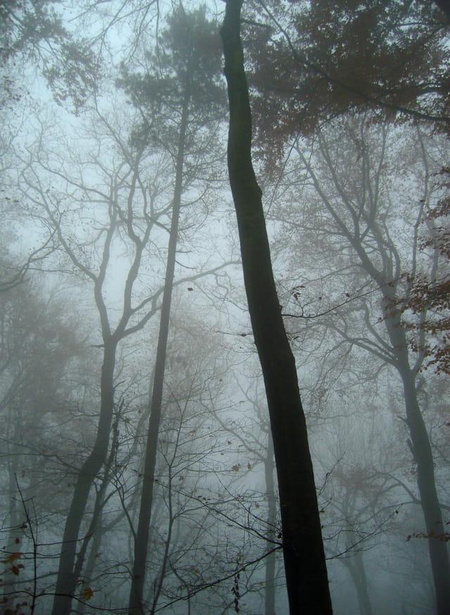 bois de novembre