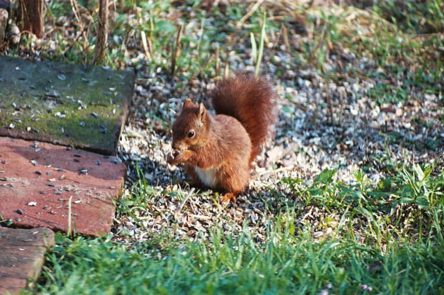 Bon appétit écureuil