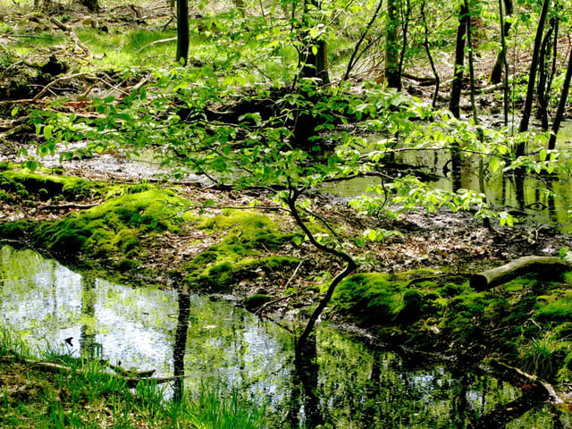 Bonsai en forêt