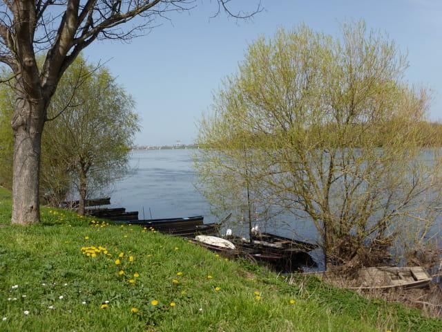 Bord de Loire au printemps