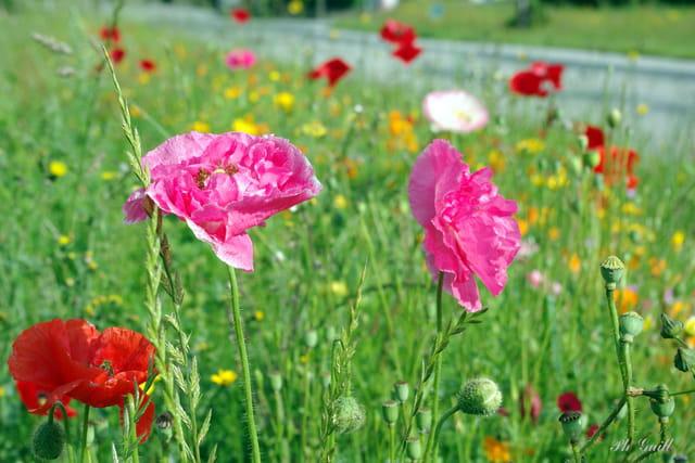 bord de route fleurie