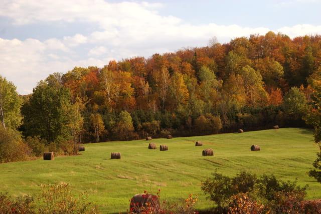 Bottes de foin, couleurs d'automne