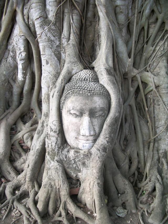 Bouddha sertie de racines