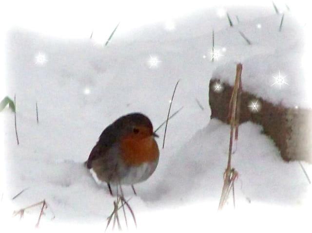 Boule de plumes sous la neige