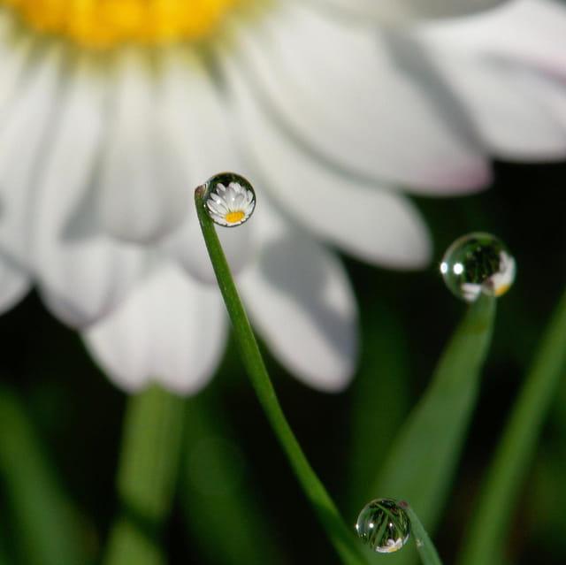 Boules de cristal d'eau
