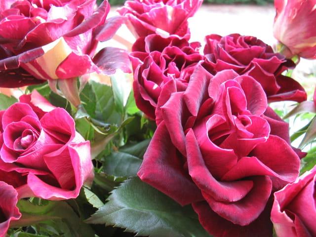Bouquet d'amour fou