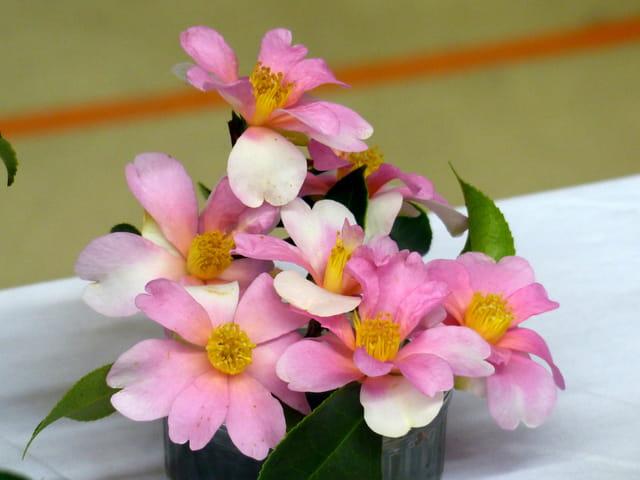 Bouquet de camélia d'automne