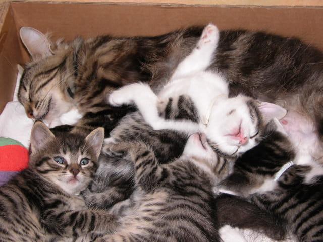 Bouquet de chatons