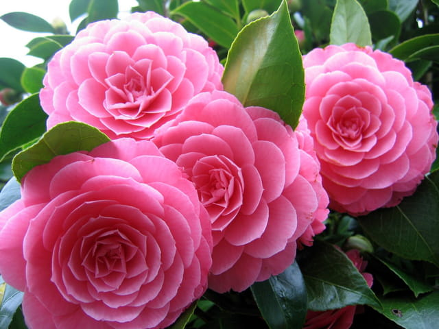 Bouquet de mars