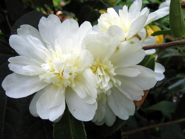 Bouquet de novembre au jardin