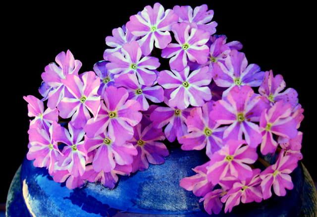 Bouquet de verveines