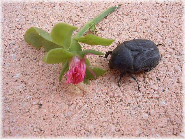 Bouquet pour scarabée