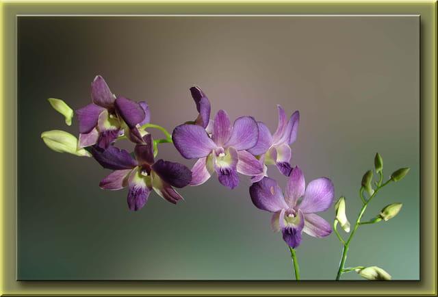 Branche de Dancing Flora