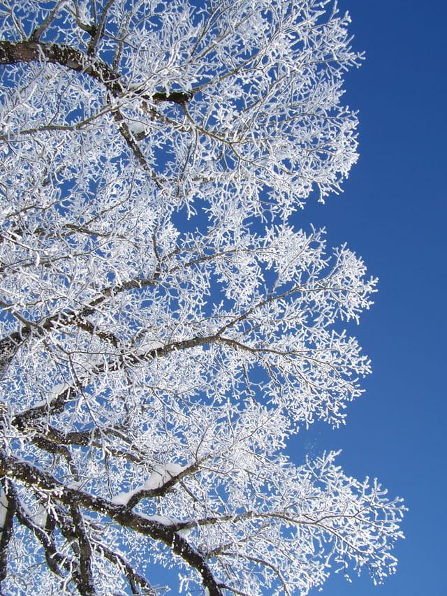 Branches ou branchies