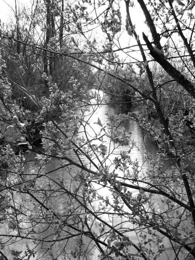 Branches sur le canal