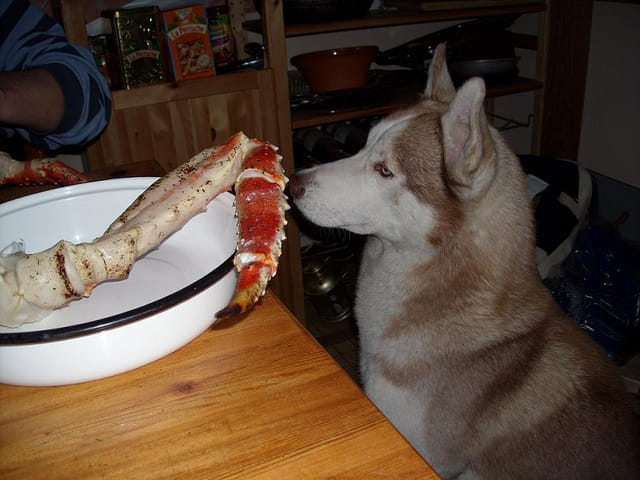 Bruce et la pince de crabe géant