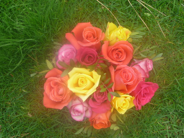 brume de roses