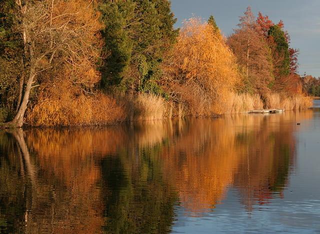 C'est beau un étang en automne