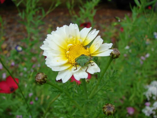 C'est ma fleur