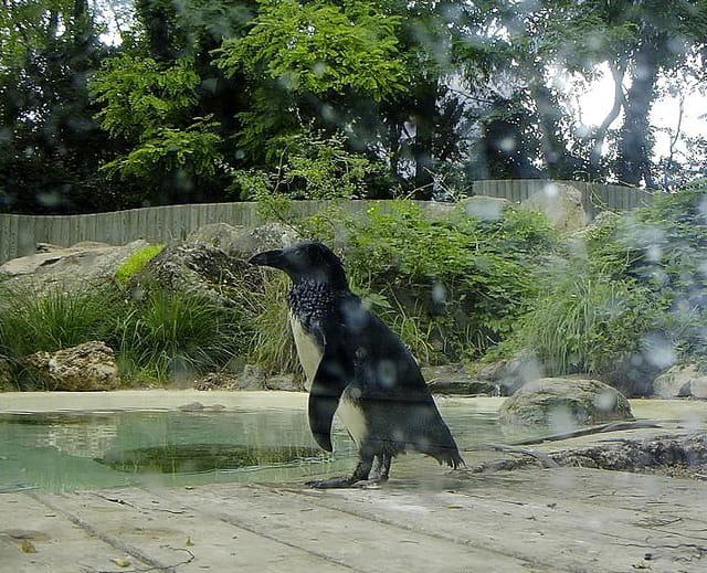 �a fait du bien un bon bain, car ici il fait plutôt chaud !