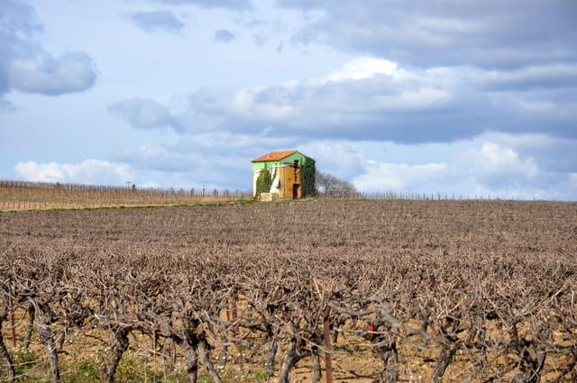 Cabane de vignes