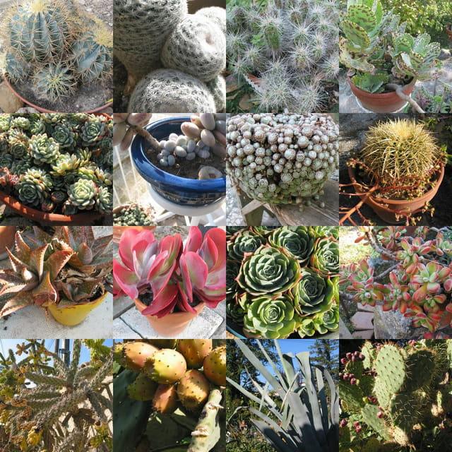 cactus et succulentes par marcel lopez sur l 39 internaute. Black Bedroom Furniture Sets. Home Design Ideas
