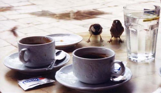 Caffé in Venzia