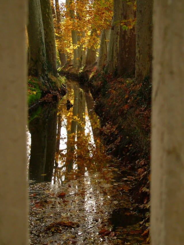 Canal d'automne