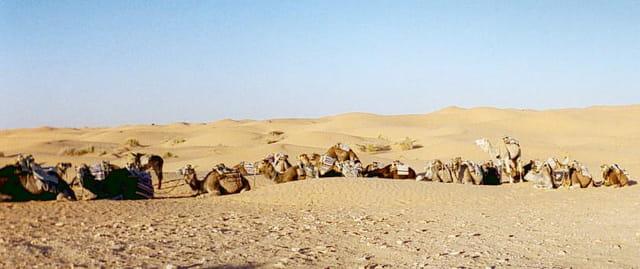 Caravane au repos