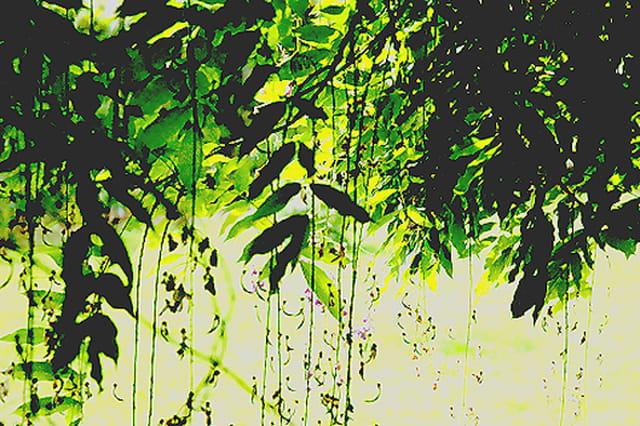 Cascade de branches de saule