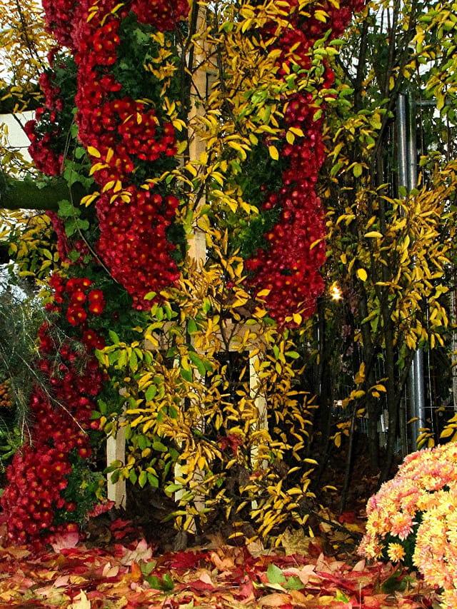 cascade de fleurs d 39 automne par alain legrand sur l 39 internaute. Black Bedroom Furniture Sets. Home Design Ideas