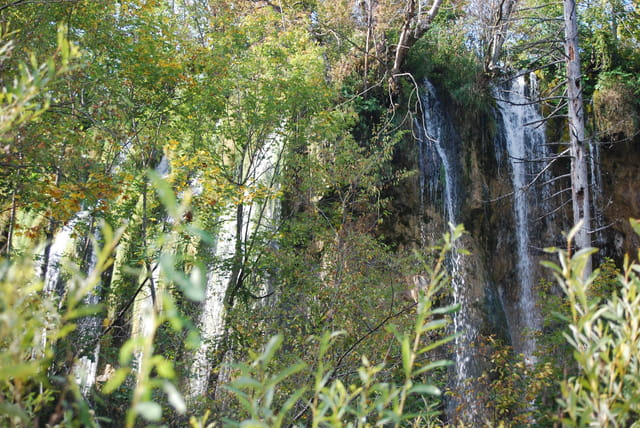 cascades dans les bois