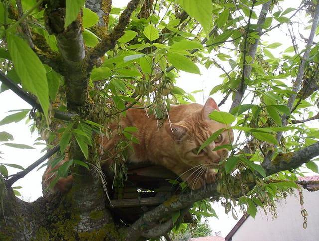 Casimir sur son arbre