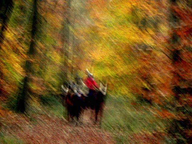 Cavalières d'automne