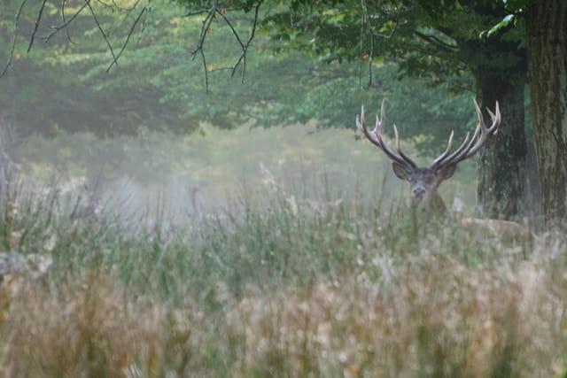 http://image-photos.linternaute.com/image_photo/640/cerf-cache-dans-les-hautes-herbes-1413386004-1697564.jpg