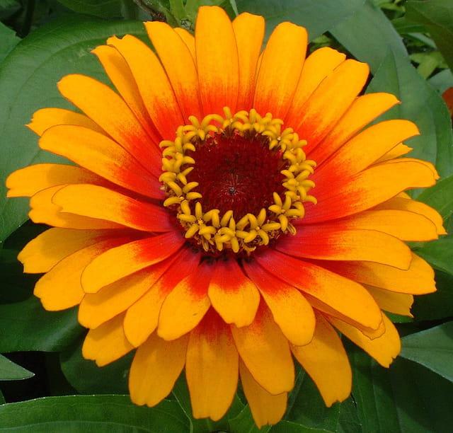 Petites fleurs dans le fleur