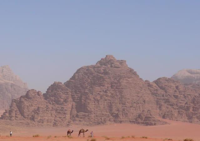 Chameliers dans le désert de Wadi Rum