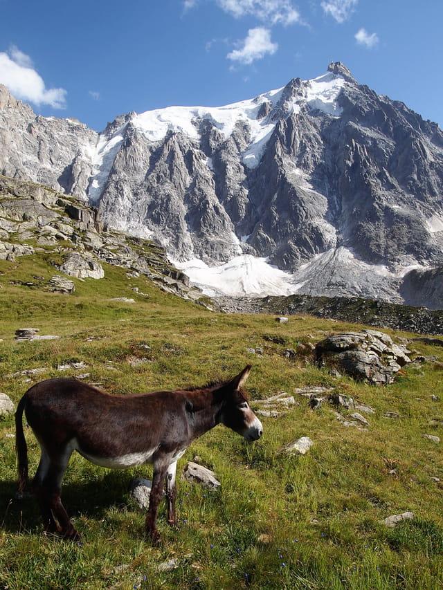 Chamonix (Plan de l'Aiguille 2317 m)