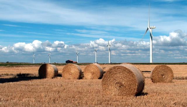 Champ de blés, et d'éoliennes...